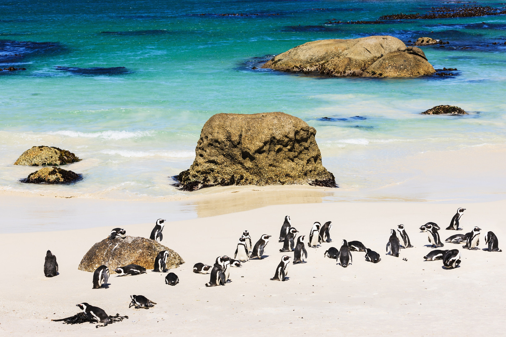 african-penguins__5b02843d01949648441819